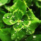 """""""Best of Irish Luck"""" by debsphotos"""