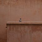 Cat at the Saadian Tombs - Guardian by Rebecca Silverman