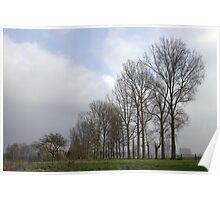Majestic Tree Line Poster