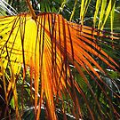 Colours of a Cabbage Tree Palm by Marilyn Harris