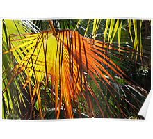 Colours of a Cabbage Tree Palm Poster