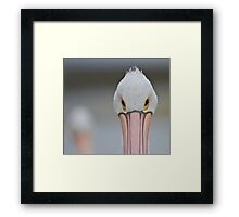 Pelican Eyes Framed Print