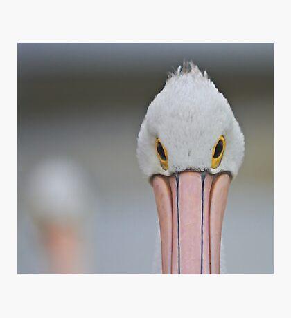 Pelican Eyes Photographic Print