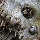 Skull Tree by Michael  Herrfurth