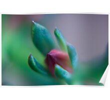 succulent bud Poster