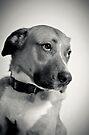 Humphrey Dogart, Rising Star by Johanne Brunet