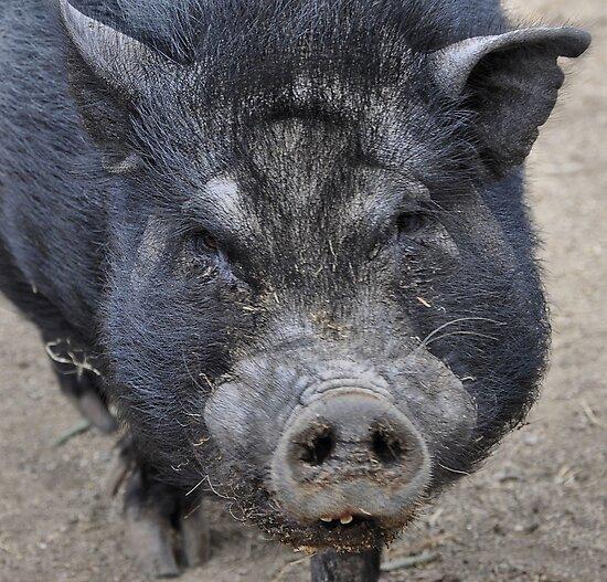 Got bacon? by Lenny La Rue, IPA