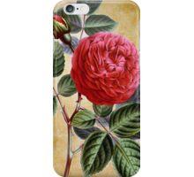Vintage Red Rose Iphone Case iPhone Case/Skin