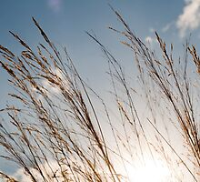 Tall Grass by Greg Shield