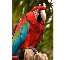 Maui Photographic Print