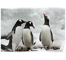 Gentoo penguins discussing the weather. Poster