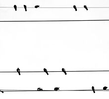 Birds On The Wire by James  Booth