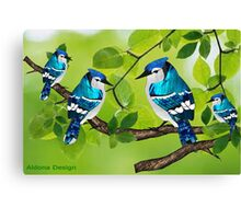 Blue jays (2372 views) Canvas Print