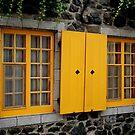 Yellow Windows by Paul Rees-Jones