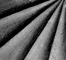 Stone furrows by marc melander