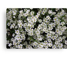 white flowers full frame Canvas Print
