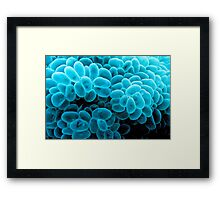 Bubble Coral - Tonga Framed Print