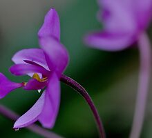 Oh! It's an orchid !  by Shubd