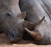 Rhino Love by Bobby McLeod