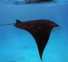 110310 Snorkeling with the Manta Rays 2 by Jaxybelle