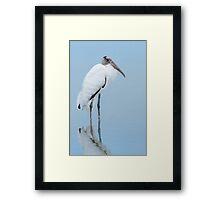 Low light Wood Stork. Framed Print