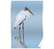 Low light Wood Stork. Poster