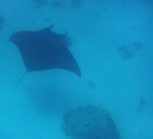 110310 Snorkeling with the Manta Rays 5 by Jaxybelle