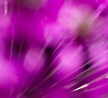 Allium Haze by Chris Paul
