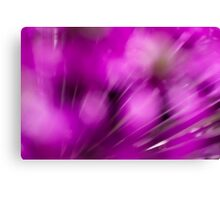 Allium Haze Canvas Print