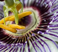 Passion Flower by Chris Paul