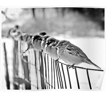 finches Poster