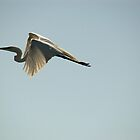 Great Egret by JimSanders