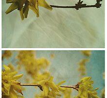 Spring - Forsythia by Sybille Sterk