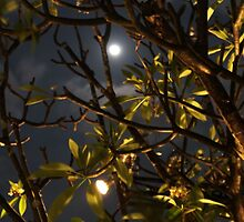 Moonlit night in the city of Chiang Mai by Janette Anderson