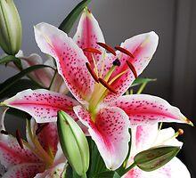 Flower Stargazer Lily by Chris Driscoll