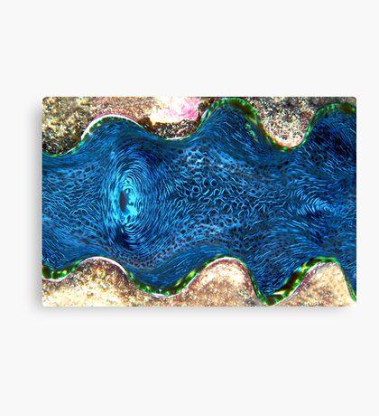 Giant Clam Canvas Print