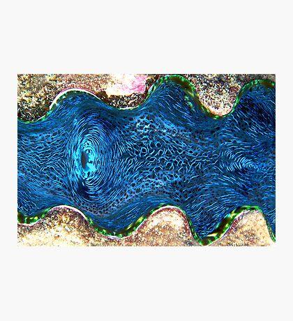 Giant Clam Photographic Print