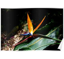Flower Tropical Bird of Paradise Poster