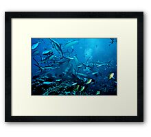 Shark Feed at North Horn, Coral Sea Framed Print