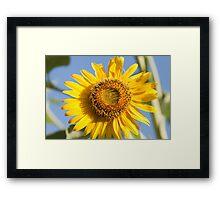 macro shot of sunflower Framed Print