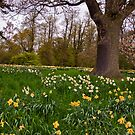 Spring in the Woods - Constable Burton. by Trevor Kersley