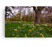 Spring in the Woods - Constable Burton. Canvas Print