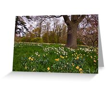 Spring in the Woods - Constable Burton. Greeting Card