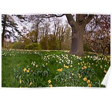 Spring in the Woods - Constable Burton. Poster