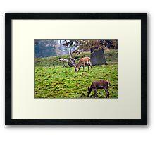 Red Deer Does Framed Print