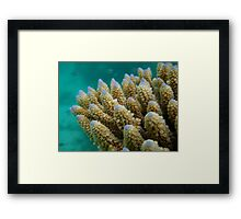 Gardens Below – Diving in the Seychelles Framed Print