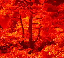 The Burning Bush(s) by ©  Paul W. Faust