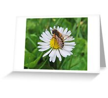 Drone Alone Greeting Card