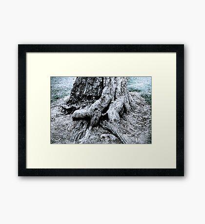 Tree base Framed Print
