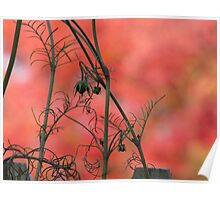Red fall flowers Poster